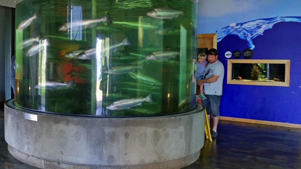 salmon at fundy aquarium new brunswick