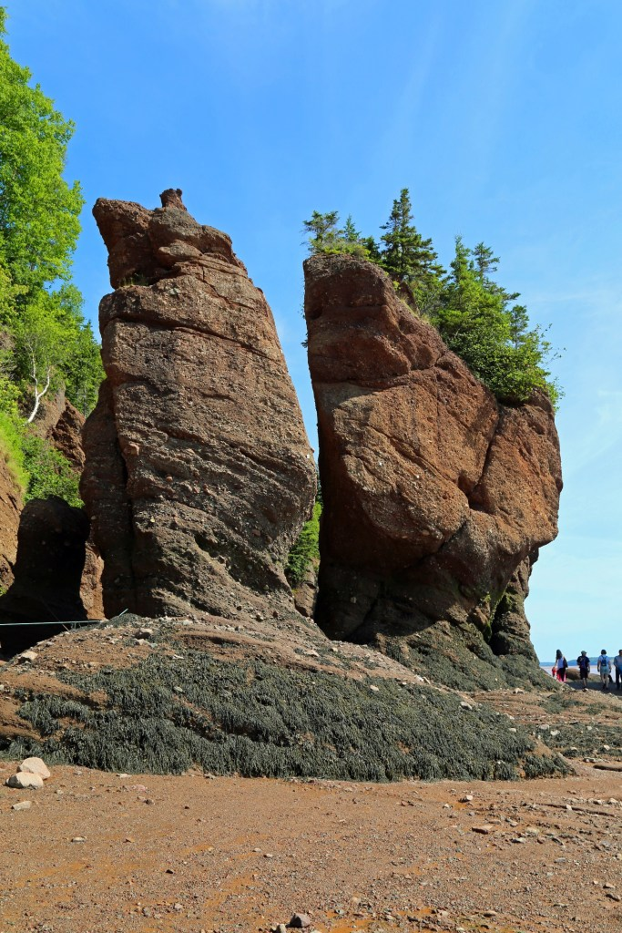 Rock formation on the sea floor Hopewell Rocks