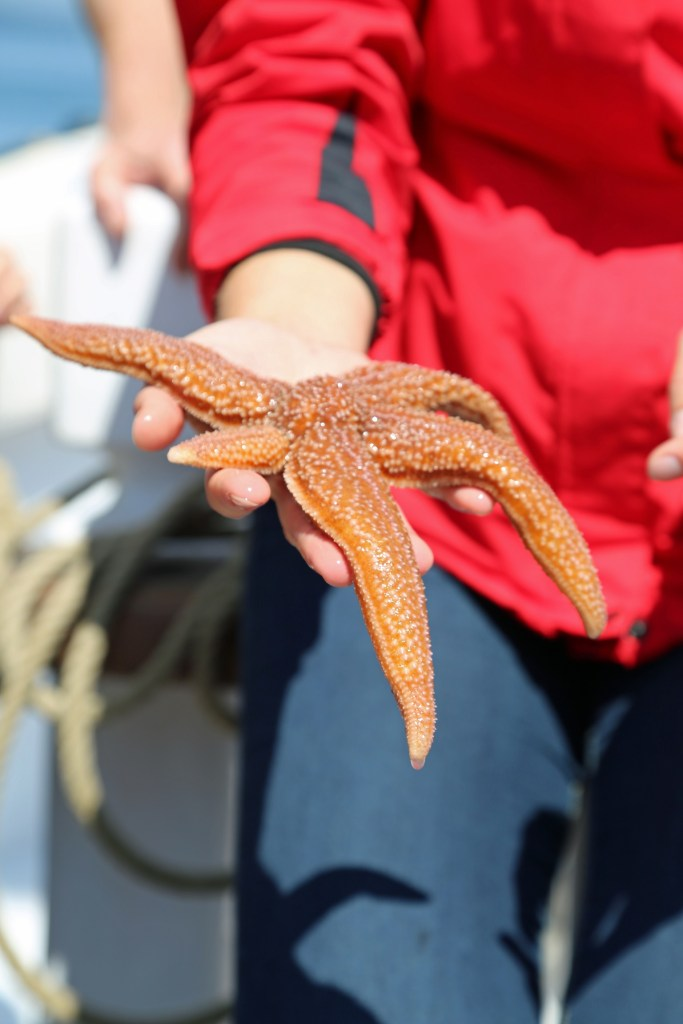 sea star from the touch tank