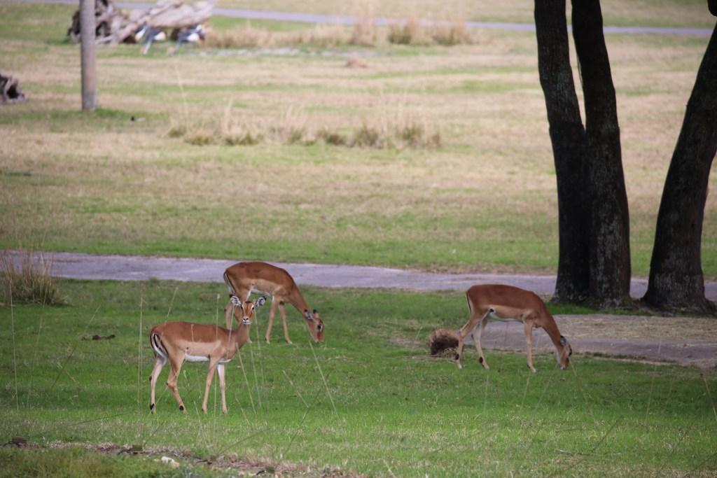 Animal Kingdom Lodge Savannah View Room View