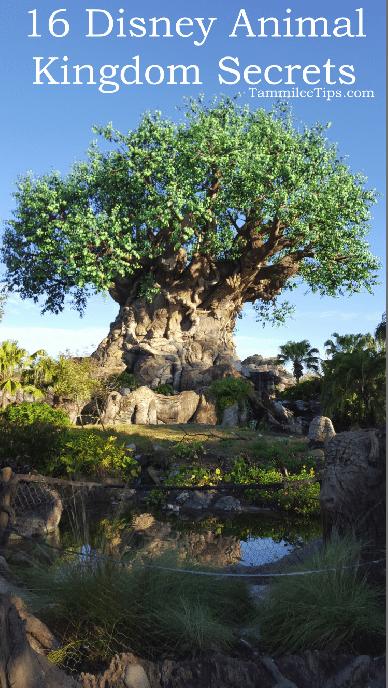 16 Disney Animal Kingdom Secrets
