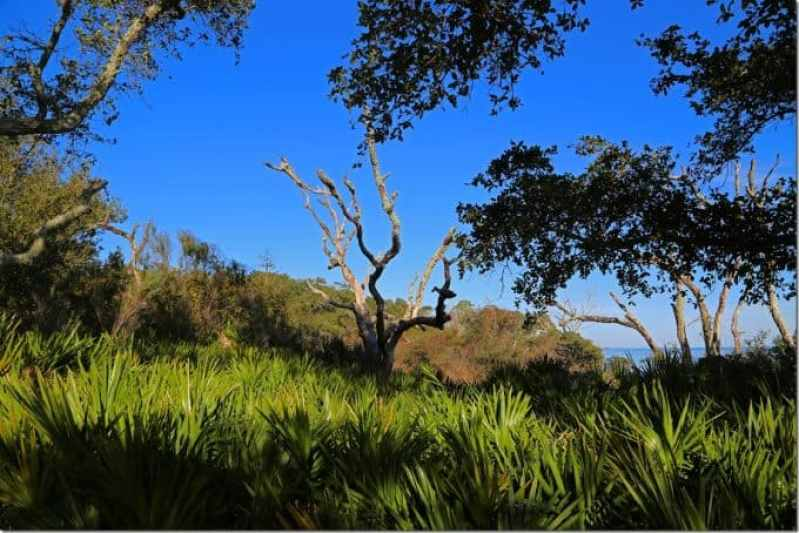 Off the beaten path at Naval Live Oaks Area of Gulf Islands National Park