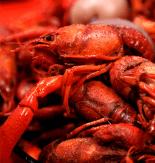 Southwest Louisiana Crawfish