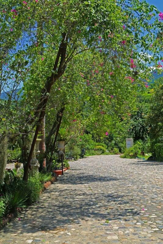 Puerto vallarta botanical gardens tammilee tips - Puerto vallarta botanical gardens ...