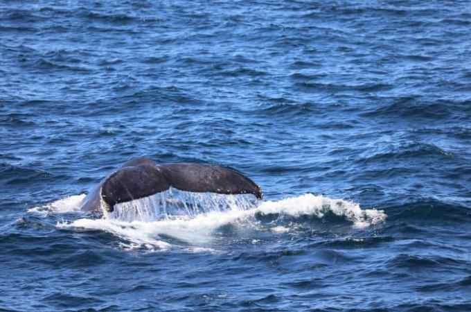 Cabo San Lucas Whale Watching Excursion