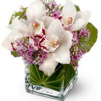 Lovely Orchids from Tammys Floral