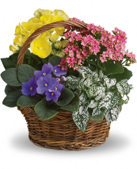 Spring Has Sprung Mixed Basket T93-1A