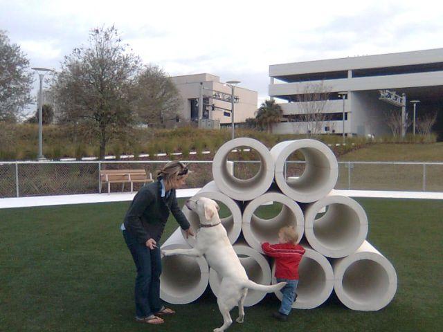 park-dog2