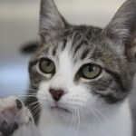Cats Rescued from St. Croix are Ready to Meet You at Cat Depot