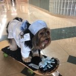 """Regional Medical Center Bayonet Point Introduces an Additional """"Volunteer"""" to Its Pet Therapy Dog Program"""