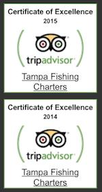 tripadvisor tampa fishing charters