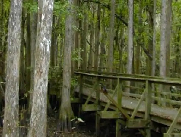 florida's state forests are state forests overseen by the florida forest service.there are 35 state forests in florida covering more than 1,058,000 acres. Florida Forest Service Lakeland Take Nothing For Granted