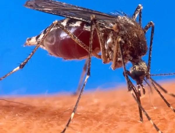 mosquito illness