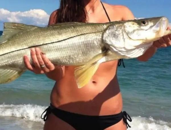Atlantic Snook Florida