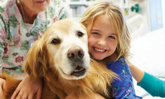 Unleashing HOPE  Stem cell therapy for pets