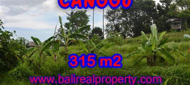 Tanah di Canggu dijual 3.15 Are di canggu brawa Bali