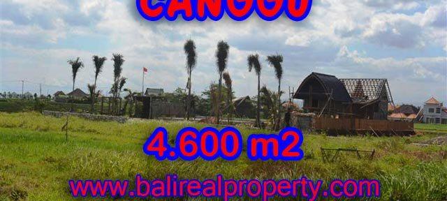 Tanah dijual di Bali 46 Are di Canggu pererenan