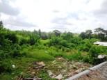 TJCG150 - Dijual tanah ( Land for sale ) di Canggu Bali - 04