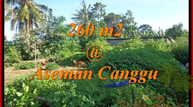JUAL TANAH di CANGGU BALI 260 m2 di Canggu Brawa