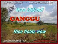 DIJUAL MURAH TANAH di CANGGU Untuk INVESTASI TJCG164