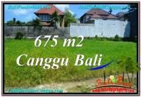 JUAL TANAH MURAH di CANGGU 6.75 Are Lingkungan villa & Hotel