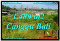 JUAL TANAH MURAH di CANGGU 1,480 m2 View sawah lingkungan villa