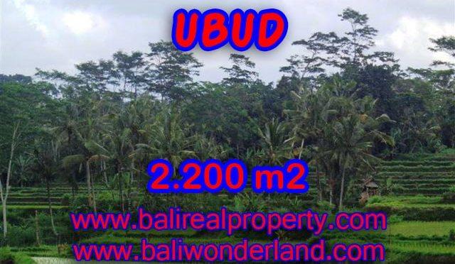 Tanah di Ubud Bali dijual 2.200 m2 view sawah dan gunung di Ubud Payangan