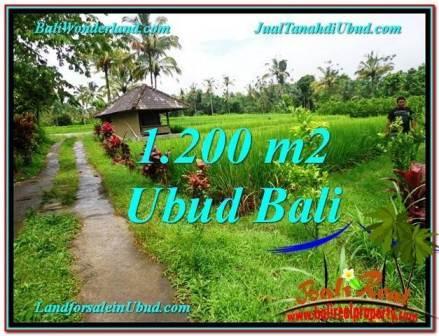 DIJUAL TANAH MURAH di UBUD BALI 1,200 m2 di Ubud Payangan