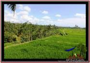 TANAH di UBUD JUAL MURAH 45,000 m2 View Sawah dan Tebing Sungai