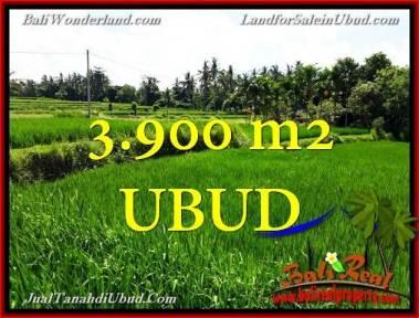 TANAH MURAH di UBUD 3,900 m2 di Ubud Pejeng