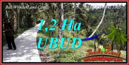 Tanah Murah di Ubud jual 120 Are View Tebing dan Sungai