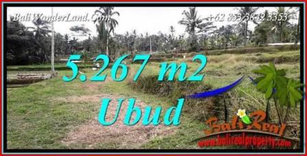 Tanah Murah di Ubud Bali Dijual 5,267 m2  View sawah