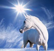 horse animal spirit