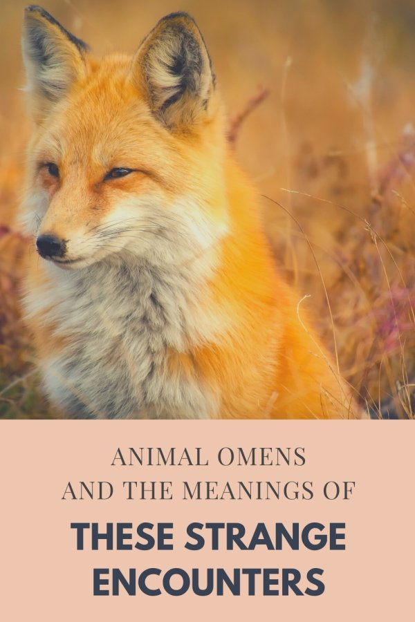 Animal Omens And The Meanings