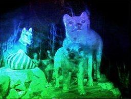 tanahoy.com hologram