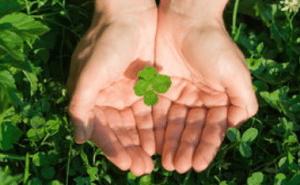 tanahoy.com four_leaf_clover_leaf