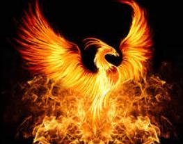 tanahoy.com phoenix