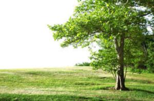 tanahoy.com tree