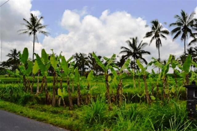 Tanah dijual di Ubud cocok untuk villa - TJUB002