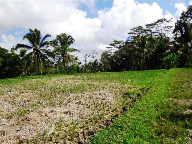 Tanah dijual di Ubud dengan view cantik ( TJUB094 )