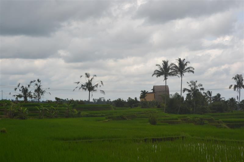Tanah di Tabanan Bali dijual 35 Are di Tabanan