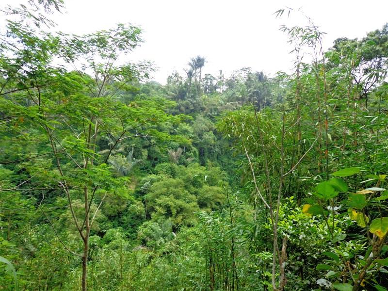 Jual tanah di Ubud 50 Are di Ubud Tegalalang  Bali