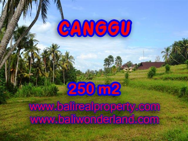 Tanah dijual di Bali 2,5 are di Canggu Pererenan