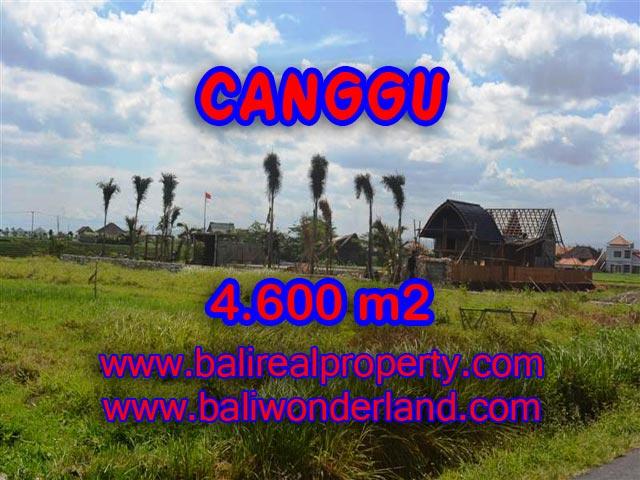Jual tanah di Canggu 46 Are View sawah, laut , sungai di Canggu pererenan