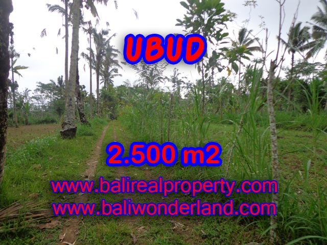 Jual tanah di Bali murah View tebing dan hutan di Ubud Tegalalang