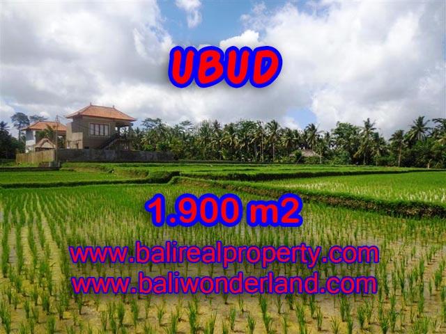 Tanah dijual di Ubud Bali 19 Are di Dekat sentral Ubud