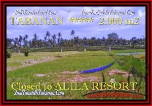 TANAH di TABANAN JUAL 2.000 m2  view sawah dan Gunung