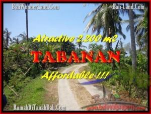 JUAL TANAH MURAH di TABANAN BALI 2.200 m2  View kebun