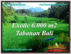 JUAL TANAH MURAH di TABANAN BALI Untuk INVESTASI TJTB306