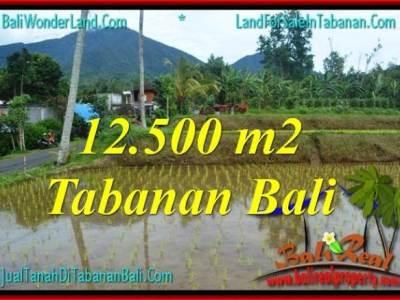 TANAH MURAH di TABANAN BALI DIJUAL 125 Are View gunung dan sawah